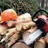Рубка леса: закон — на доработку